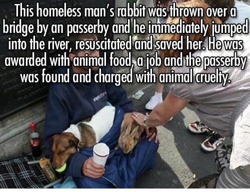 Homeless Rabbit